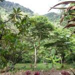 Vista desde el restaurante, en armonía con lo verde y natural.
