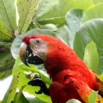 macaws eatinng almonds in front of lodge