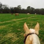Horses everywhere