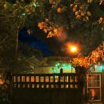 treehouse deck