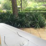 Relaxing Garden View at Breakfast