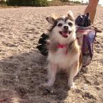 Priscilla enjoying a day at the beach