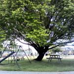 Playground and picnic/barbecue area.