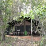 Foto de Mara Bush Camp