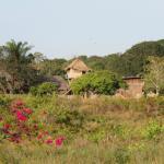 Caiman House nestled amongst the trees