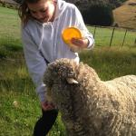 Lauren feeding Sam the sheep