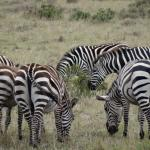 Kenya Incentive Tours & Safaris - Day Tours
