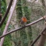 Robin followed us all the way round