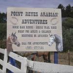 Point Reyes Arabian Adventures