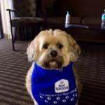 our dog Lucky at the Best Western N Ft Myers