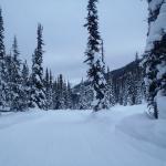 Golden Snowmobile Rentals & Tours Foto