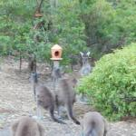 There are birdfeeders, possum feeders and specialised animal food supplied.