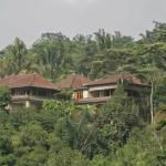 Home from a beautiful jungle walk