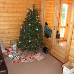 The tree that was waiting for us on arrival!