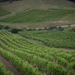 The views from Mahurangi River Winery