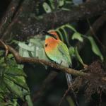 Bonito pájaro cuyo nombre no recuerdo