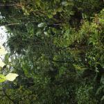 El bosque lluvioso