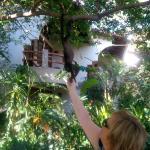 Monkey Right above my Head