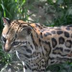 Toller Natur-Zoo mit Blück über Cuenca