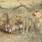 Photo de Samburu Serena Safari Lodge