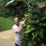 Bananas in the garden