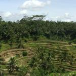 Day trip to the rice terraces