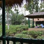 tea garden in the campus