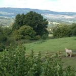 View from our Bridge of the Quantock Hills