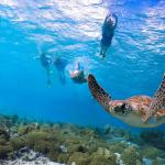Blue Ocean Adventure Tours