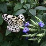 조용한 공원, 나비 부화장도 있습니다.