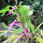 Pretty flora