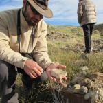 Fosseis e explicações do Guia Silvestre