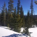 X-country skiing Fraser Experimental Forest part of Arapahoe National Forest