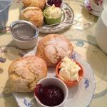 Yum!  Cream tea at the Courtyard Cafe, Somerton.  They even warmed them up for us!