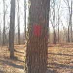 Red blaze along Mossy Ridge Trail