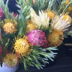 Protea of all kinds can be found. Beautiful!