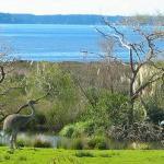 Katikati Bird Gardens