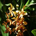 one of 400 orchids in my garden