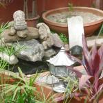 our turtle garden