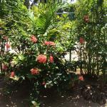 Benjamine garden