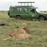 4 x 4 customised safari vehicle