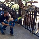 Had a blast feeding the giraffes!