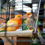 Belos pássaros na área recreativa do Hostal
