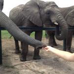 At the Elephant Park near the Phantom River View Estate