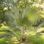 Végétation tropicale vue de la Casa Lapa