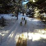 Dogsledding in the pristine woods - Excerpted from a GoPro video.