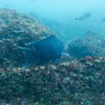 Foto de Mares Dive Center