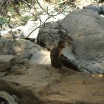 In the name of wildlife one can see monkeys as other wildlife have gone deep inside to escape cr