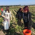 Gleaning for the Society of St. Andrews