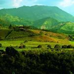 Photo de Hacienda Bambusa